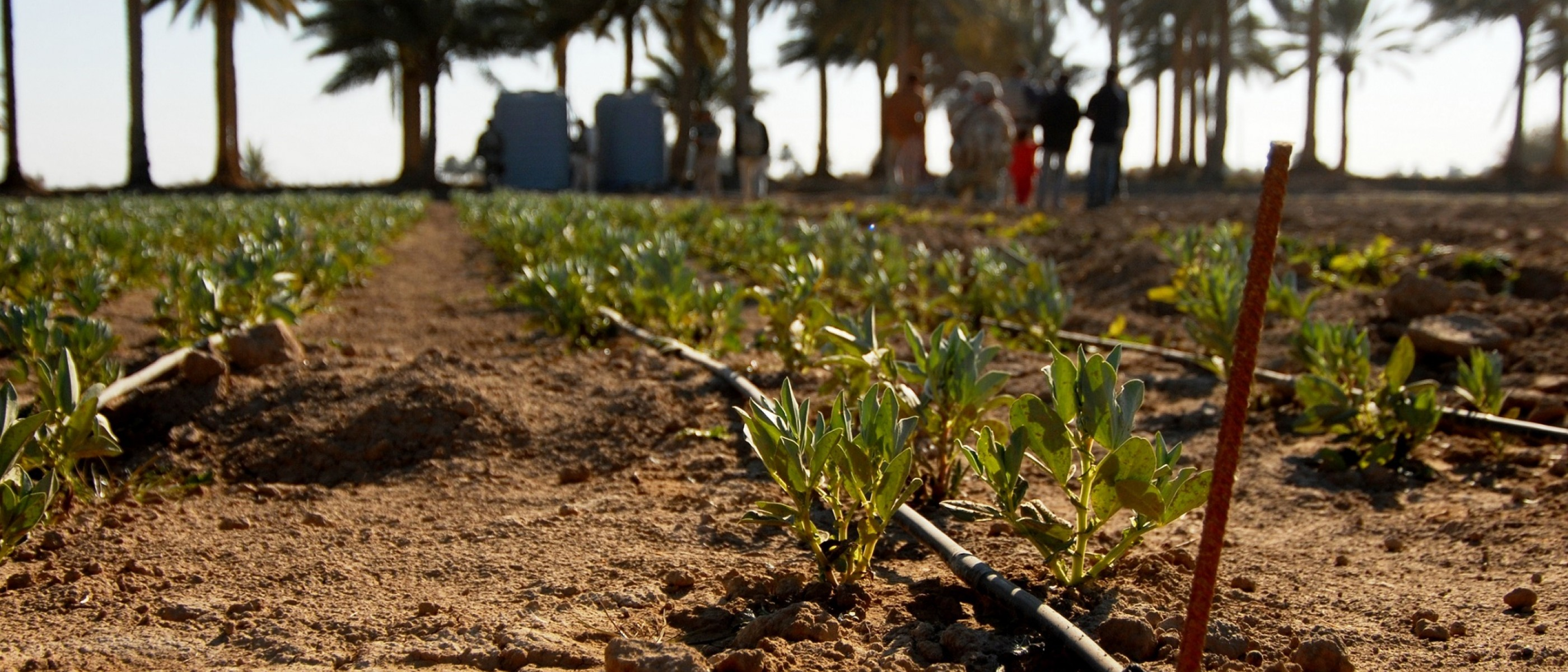 The Circular Crisis: Food Insecurity in the Middle East's War Zones